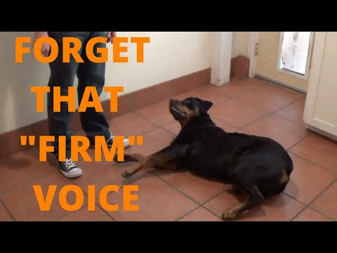 How To Talk To Your Dog When You Are Training Them - Don't Be 'Firm' Dog Training Voice