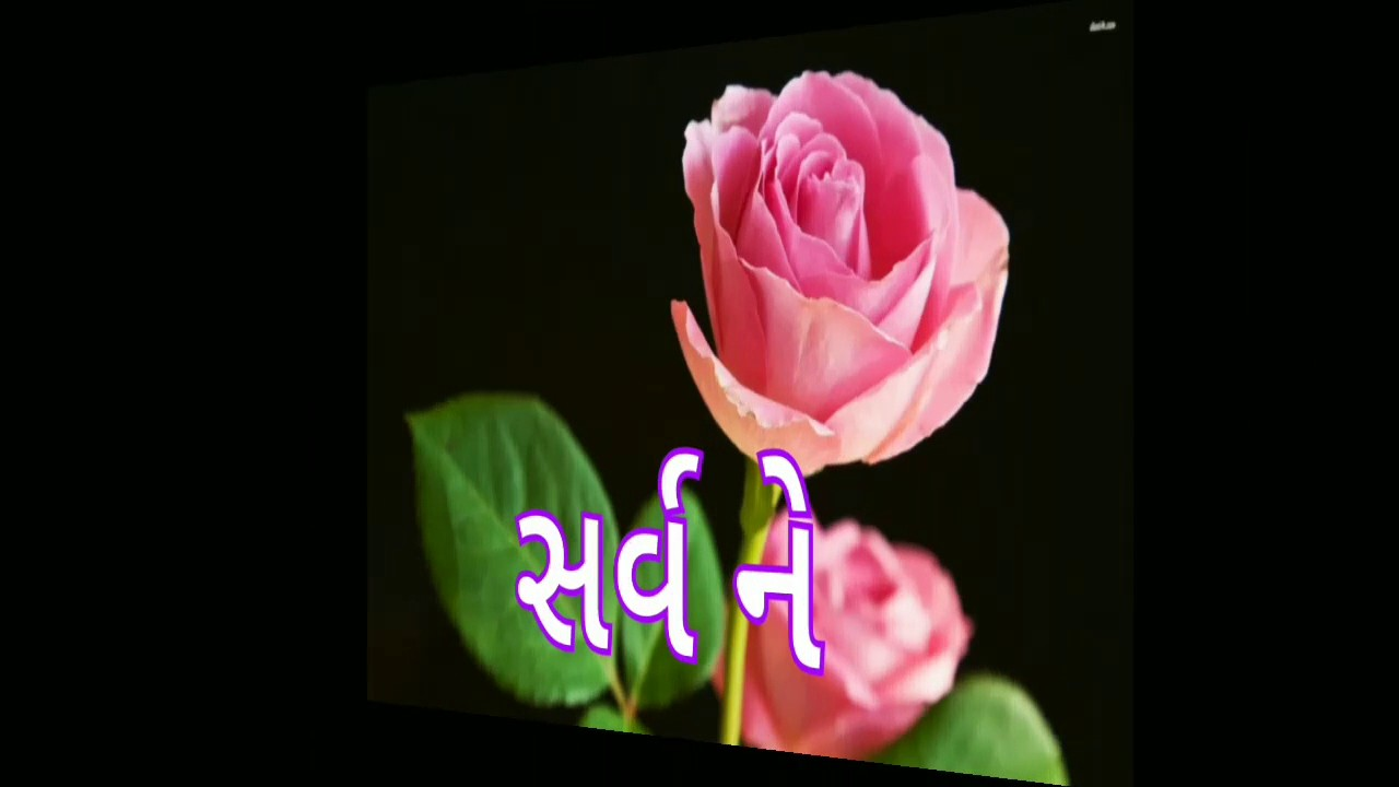 Funny Gujarati Good Morning Images Best Funny Images