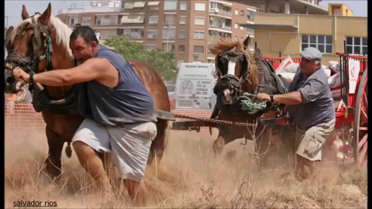 Caballos de tiro y arrastre en silla valencia youtube for Sillas para caballos