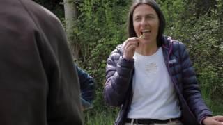 Body Empowerment  vitale Ernährung durch die Wildkräuterküche von Stefanie Gross blau