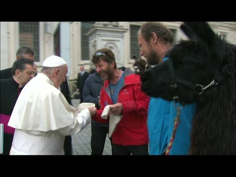 Llamas and their owners meet Pope Francis at the Vatican