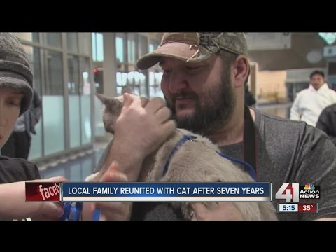 KC family reunited with cat seven years later