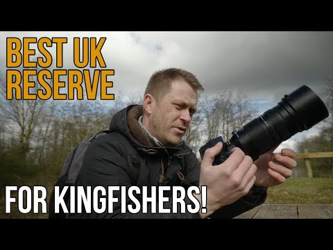 Wildlife Photography At The UK's BEST NATURE RESERVE For Kingfishers!