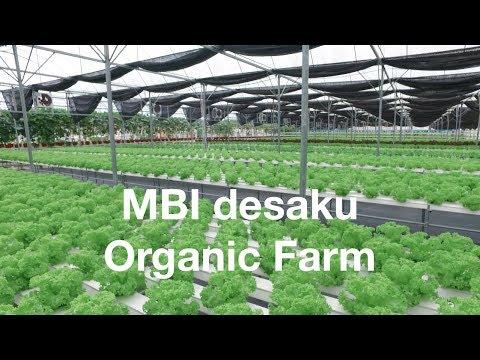 MBI desaku organic farm, Kulim, Kedah