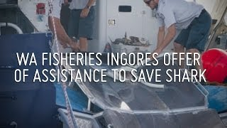 Operation Apex Harmony: WA Fisheries Dept ignores offer of assistance to save shark