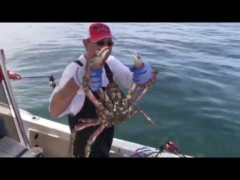 Crabbing Santa Monica Bay