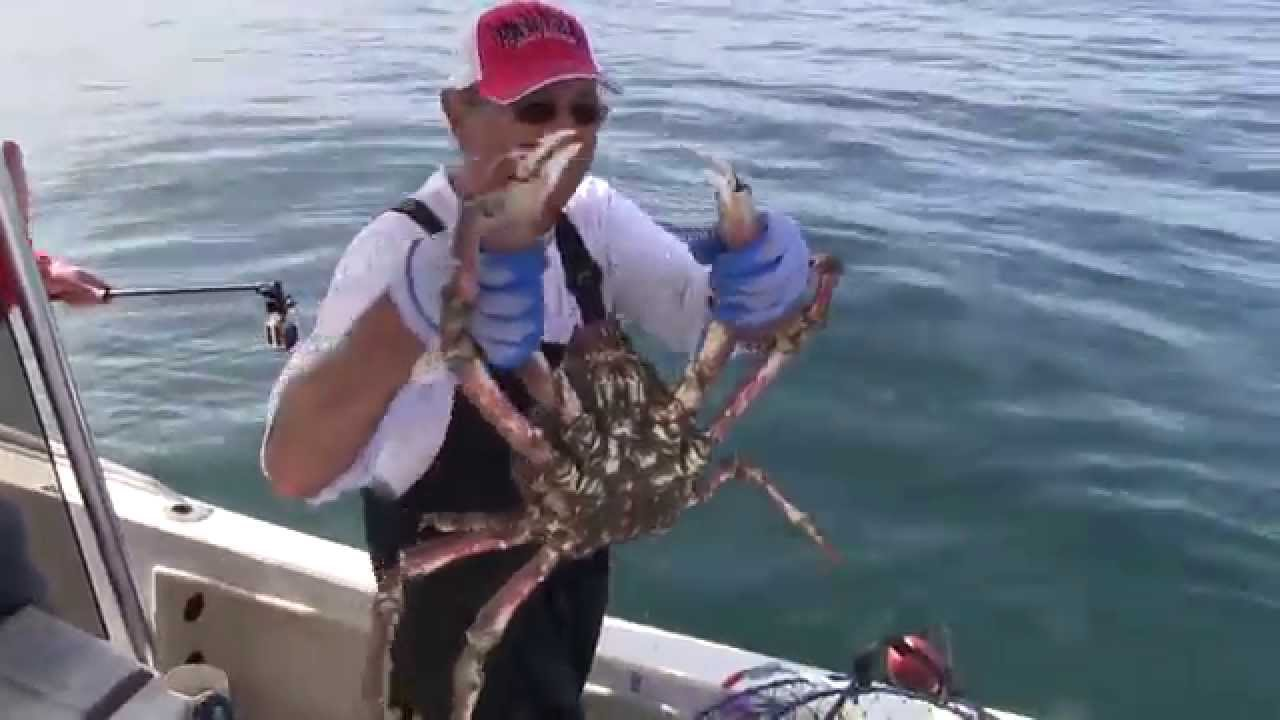 Lobster fishing redondo beach best lobster 2017 for Redondo beach fishing report