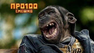 Дети и смешные животные в зоопарке! Смотреть всем! Обхохочешься!