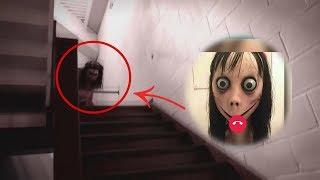 MOMO y el Extraño VIDEO Captado en Japón