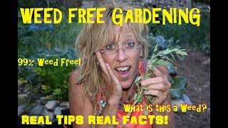 SUSTAINABLE HOMESTEADING: TOP TIPS FOR A WEEDLESS GARDEN