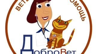 Ветеринарная клиника ДоброВет Иркутск кардиологическое обследование