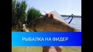 Рыбалка на ФИДЕР летом в июне 2020