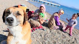 Fındık ailesi oyun videoları. Fındıklar deniz kenarında  piknik yapamıyor.
