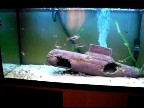 My 240 Litre 53 Gallon Shark Fish Tank 4 Higher Res Youtube