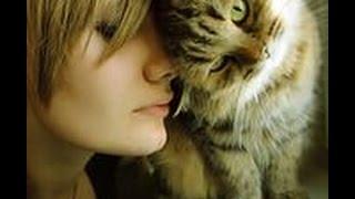 Смотреть лучшие приколы.Смешные и забавные кошки