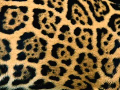 Image result for animal patterns