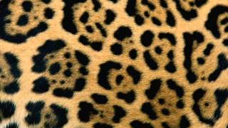 Patterns In Nature Animals