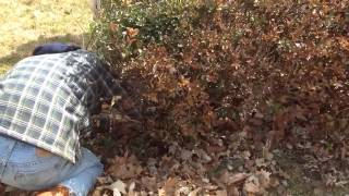 How to remove bushes and shrubs the easy way.