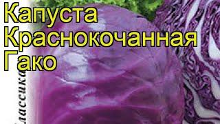 Капуста краснокочанная Гако. Краткий обзор, описание характеристик brássica olerácea