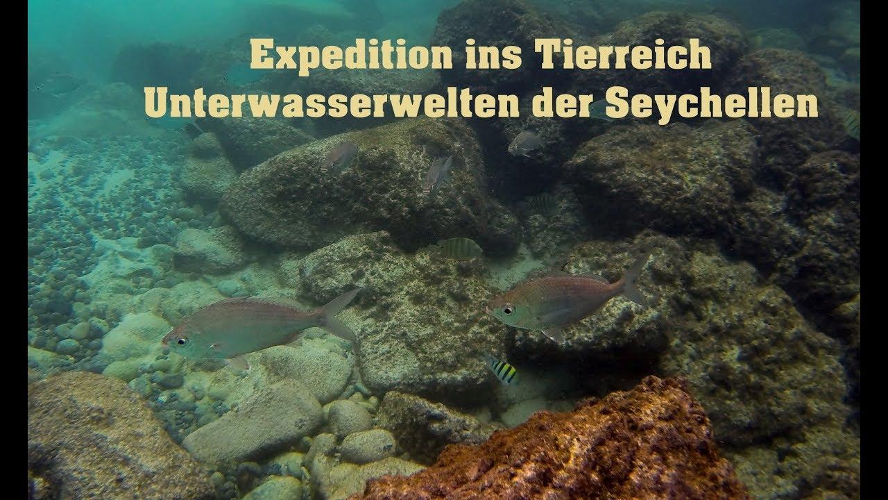 Expedition Ins Tierreich