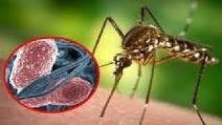 Комары убийцы