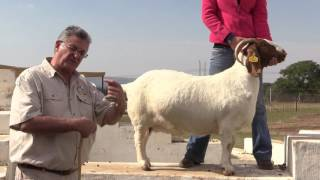 video 2 Conrad Herbst South Africa explaining the anatomy of the Boer Goat ewe/doe