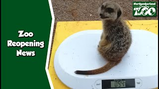 Finally - Zoo Reopening NEWS Update - Northumberland Zoo, June 10th 2020