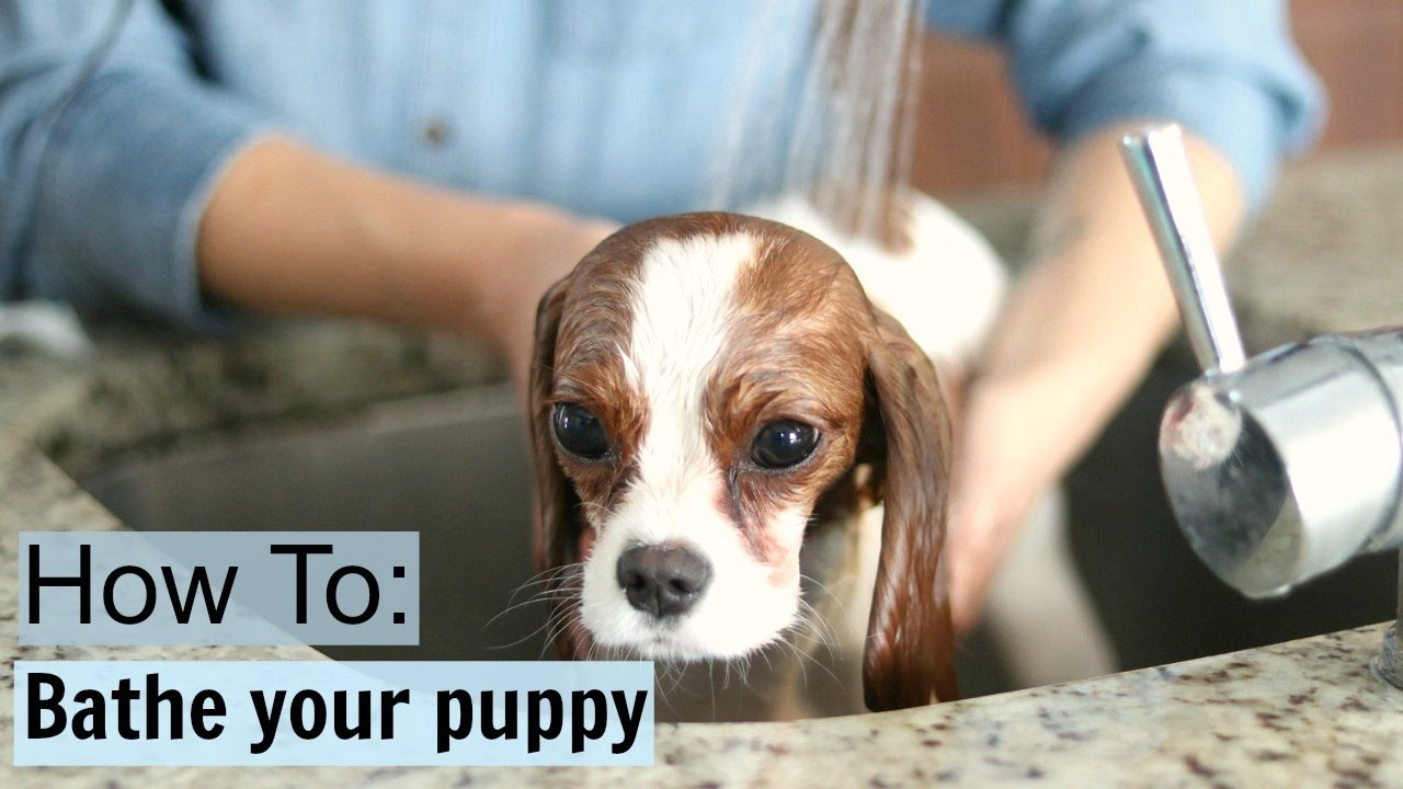 How To Safely Bathe a Puppy at home Dog Tips Tricks Milton