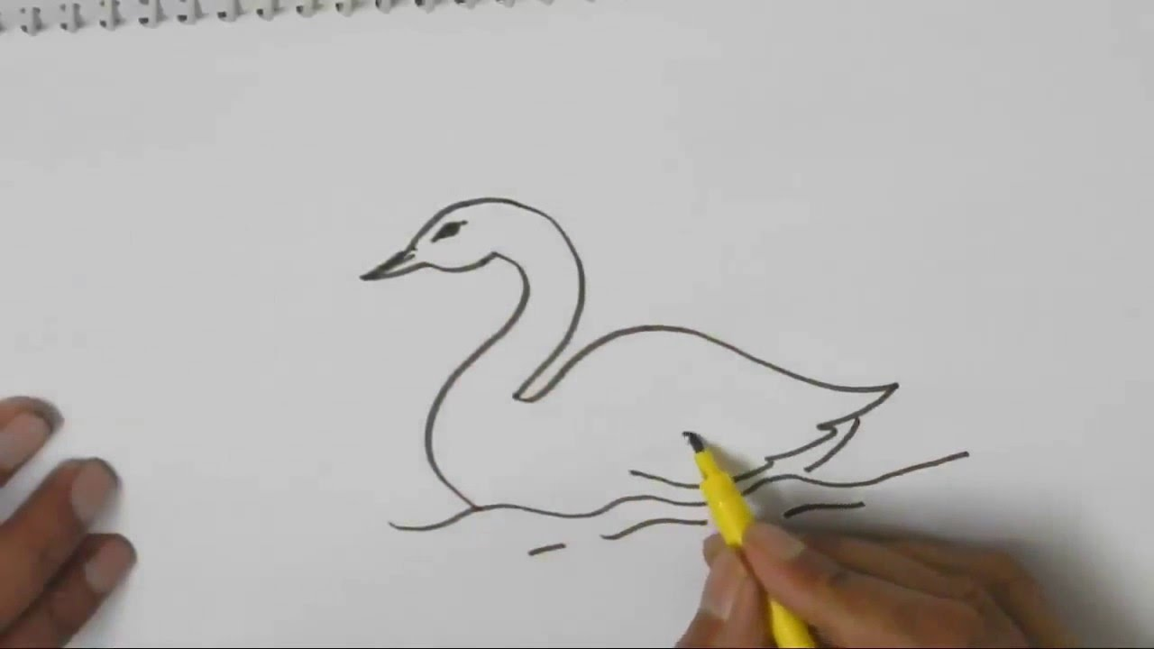 how to draw a swan in easy steps for children kids beginners youtube