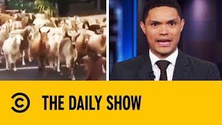 Trevor Noah Presents Animals Gone Wild | The Daily Show