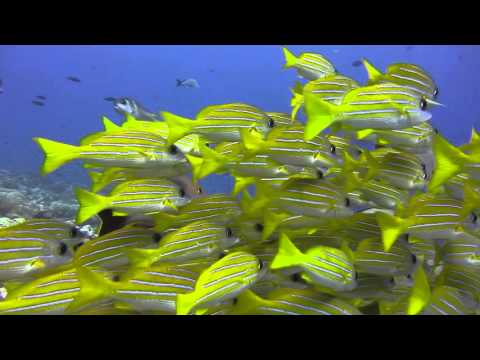 Palau Dive Trip 2015   by Wendy Tong