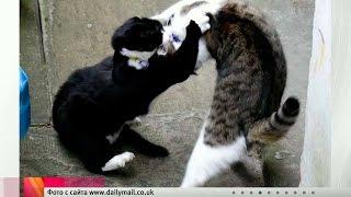 В Великобритании коты премьер‑министра и Министерства иностранных дел устроили драку.
