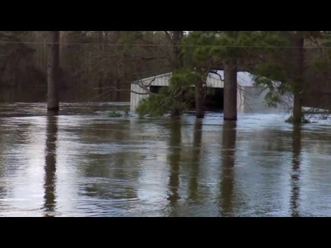 Newton Flood HD 1080p