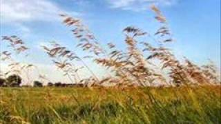 Califano - Fiore di campo di primavera
