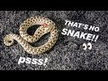 """My Angry """"cobra"""", Pissy Meets A Blind Snake  ~ He Went Inside My Carpet"""