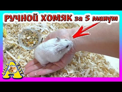 КАК ПРИРУЧИТЬ ХОМЯКА за 5 МИНУТ / Уборка в клетке у Джунгарского хомки Куки / Alisa Easy Pets