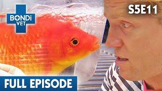 famous-goldfish-s05e11-bondi-vet