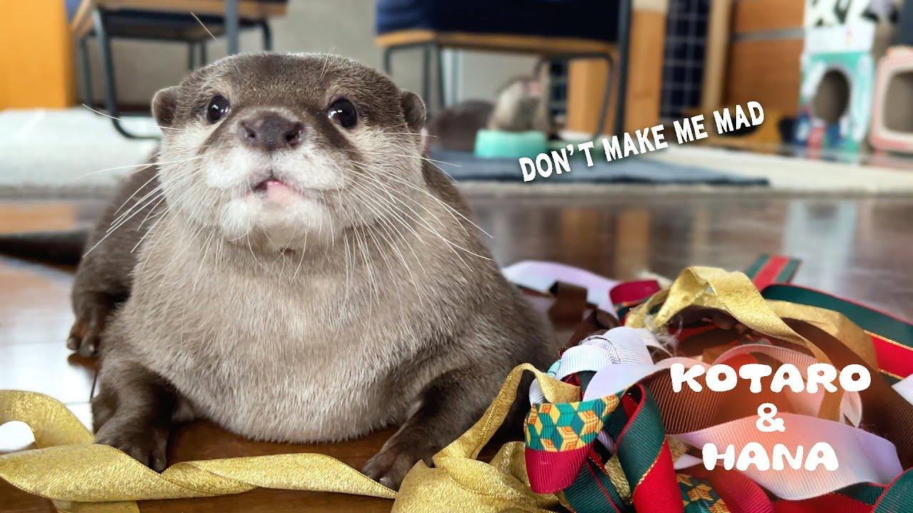 ある事をするとカワウソにすごい目でにらまれて怒られる What Happens When Cute Otter Gets Mad