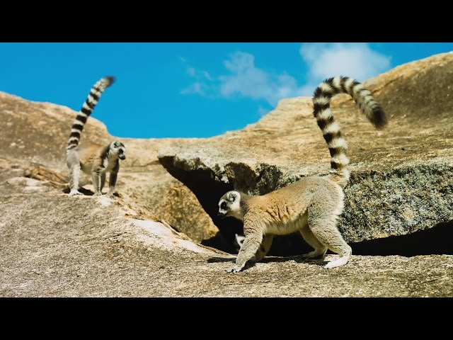 리머의 섬: 마다가스카 - 공식 예고편 (한글자막)