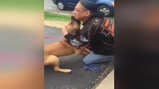 Watch This Stolen Dog Freak Out Recognizing His Owner After 2 Years