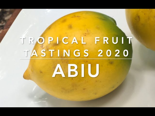 Tropical Fruit Tasting 2020 - Abiu (our first!)