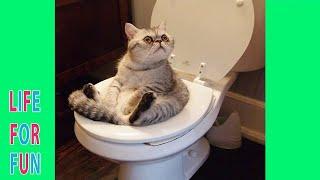 Я Ржал До Слез😂 Смешные видео / Обалденно смешные кошки! Симпатичные кошки делают забавные вещи