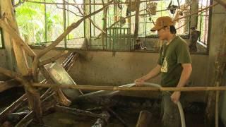 Cafe Sáng với VTV3 - Trung tâm Cứu hộ Động vật hoang dã Củ Chi