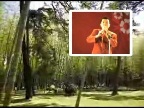 Fern-Leaf Hedge Bamboo Under Moonlight - Louis | Shazam