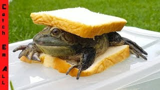 2 FROGS 1 SANDWICH! (Everybody Eats)