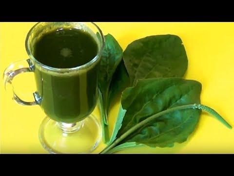 ★ Чай с семенами ПОДОРОЖНИКА   улучшит пищеварение, поможет похудеть. Курс приема чая — 10 дней.