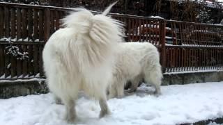 久しぶりの大雪に人間は身動きとれません(笑)