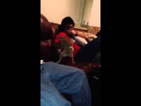 Dogs first hand job - YouTube