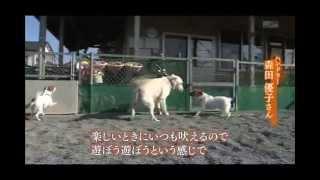 セラピードッグ ベイリー (静岡県立こども病院)2/2 thumbnail