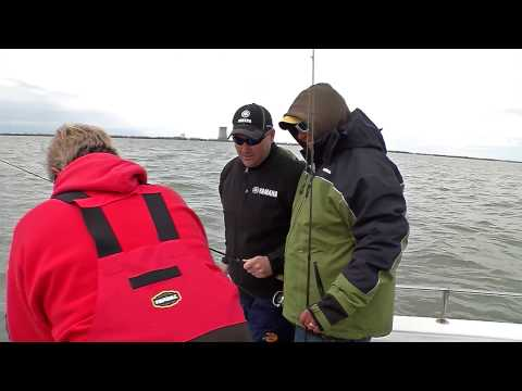 18 Lake Erie Walleyes  -Preview-